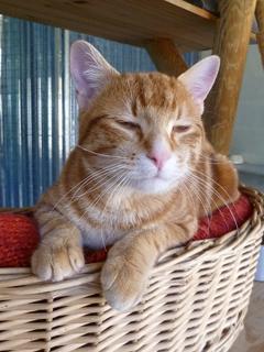 Popeye chat de 7-mois