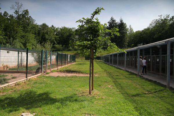 Les boxes pour chiens du refuge SPA de Brive en Corrèze