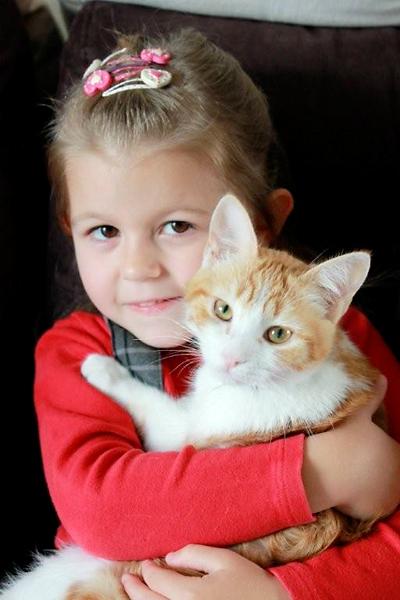 feline2