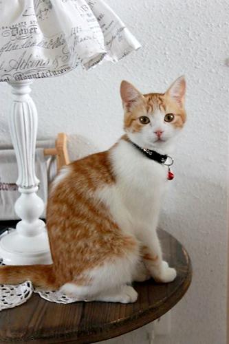 feline4