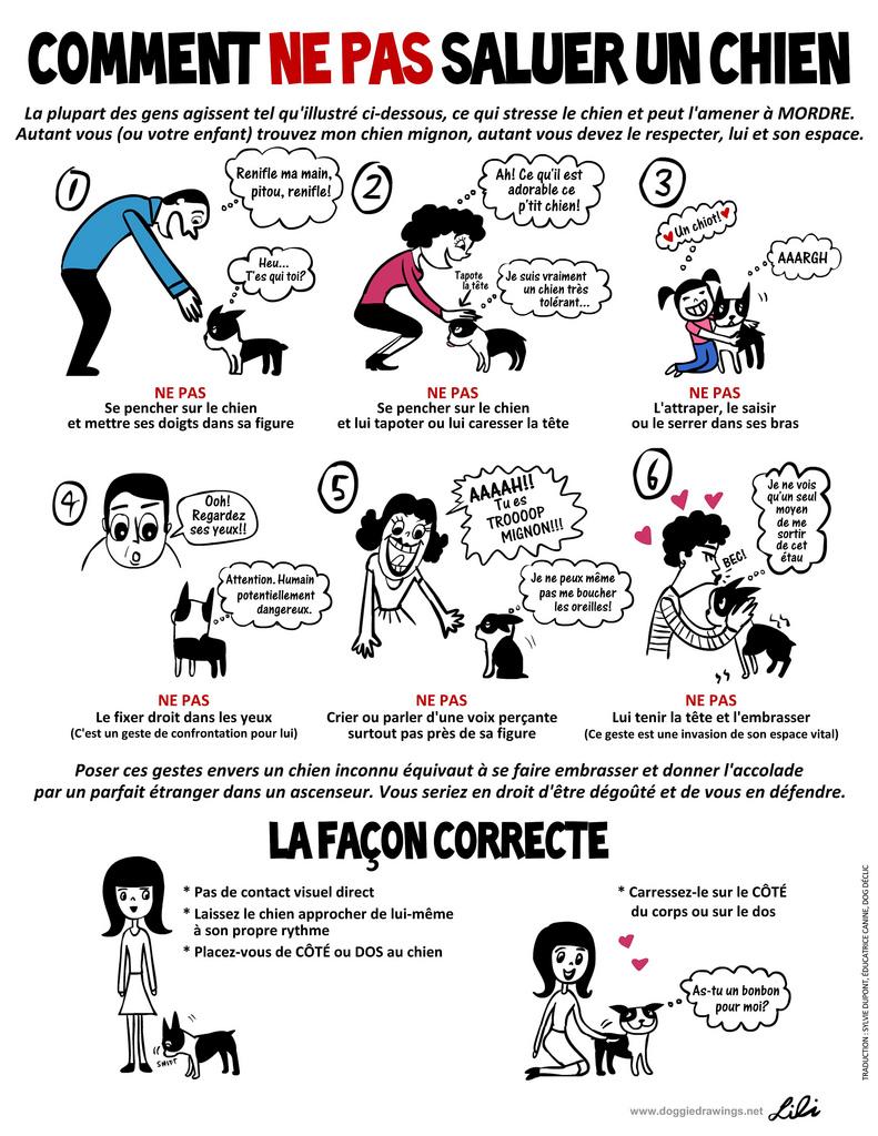 Comment-ne-pas-saluer-un-chien