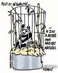 Charlie-Hebdo-Panda-Tignous3