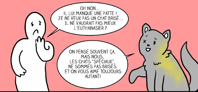 adopter-chat-4