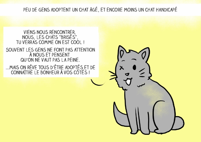 adopter-chat-6