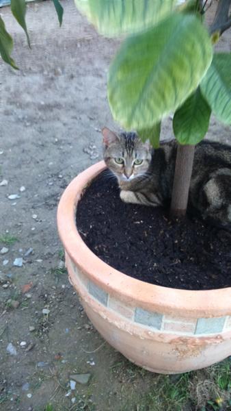 photos-portable-chat-nous-vacances-293