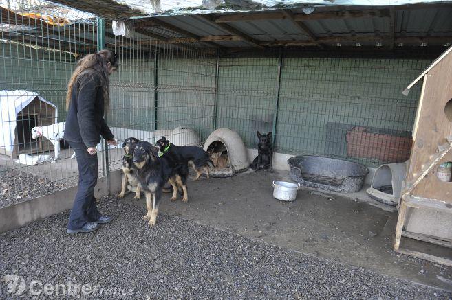 chiens-de-sionac_2979427